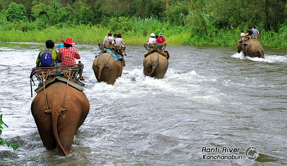 Elephant Trekking