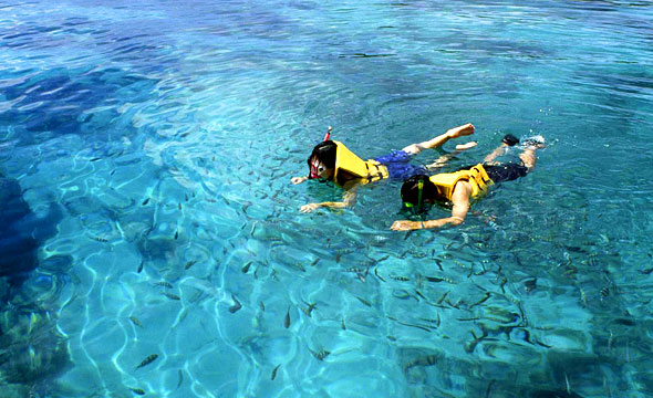 Underwater Adventure, Enjoy the Beauty of the Fish and Coral Reefs  100 Unfo...