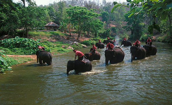 Thai Elephant Conservation Centre