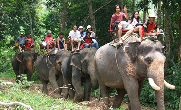 ปางช้างชุติมันต์ (น้ำตกคลองพลู)